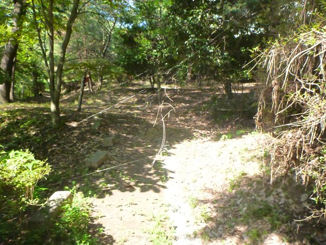 森の入口.JPG