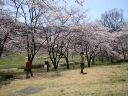 24年桜 TBG.JPG